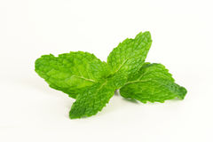 Mint leaf, aromatic herbs Stock Image