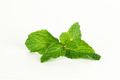 Mint leaf, aromatic herbs Stock Photography