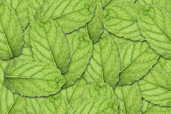 Mint Leaf Background Royalty Free Stock Photography