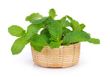 Mint leaf in the basket Royalty Free Stock Photos