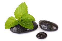 Mint leaf and black stones isolated Royalty Free Stock Photography