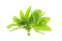 Mint Leaf. Bunch of mint isolated on white background stock photo