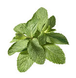 Mint leaf bunch  on white background Royalty Free Stock Image