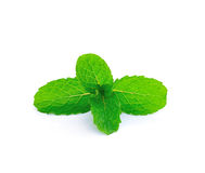 Mint leaf close up Stock Photography