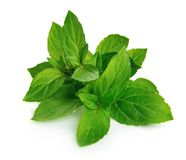 Mint leaf close up Royalty Free Stock Image