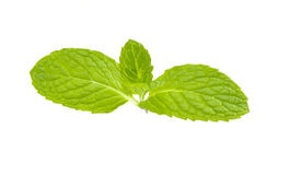 Mint leaf. Fresh mint leaf isolated on white background stock photography
