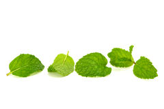 Mint leaf. Isolated on white stock photo