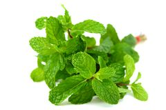 Mint leaf Royalty Free Stock Photography