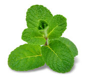 Mint leaf Royalty Free Stock Photos