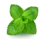 Mint Royalty Free Stock Photos