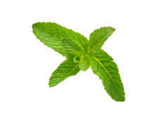 Mint leaf. Isolated on white background royalty free stock images