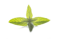 Mint leaf isolated on a white background Royalty Free Stock Images