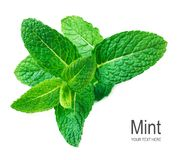 Mint leaf isolated on white background. Fresh Spearmint, menthol leaves.  stock photography