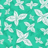 Mint leaf peppermint isolated on green background, Hand drawn vector seamless floral pattern, spicy herb kitchen texture Royalty Free Stock Image
