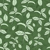 Mint leaf peppermint isolated on green background, Hand drawn vector seamless floral pattern, spicy herb kitchen texture. Line art, Doodle cooking ingredient vector illustration