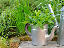 Mint leaf in a retro teapot Royalty Free Stock Photo