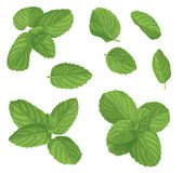 Mint leaf set Royalty Free Stock Photography
