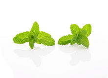 Mint leaf with stem on white Royalty Free Stock Photos