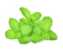 Mint leaf on white background royalty free stock images