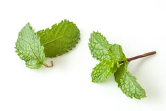 Mint leaf on white background Stock Photography