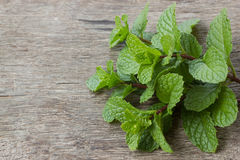 Mint leaf on wood Royalty Free Stock Images