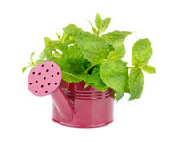 Mint Leafs Bunch Stock Photography