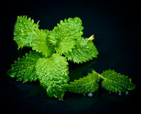 Mint Leafs Royalty Free Stock Photos