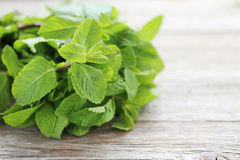Mint leafs Stock Images