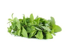 Mint leafs Royalty Free Stock Images