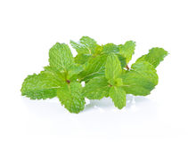 Mint leafs Royalty Free Stock Photography