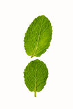 Mint leafs isolated on white background Royalty Free Stock Photo