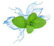 Mint leafs water splash Stock Photography