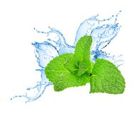 Mint leafs water splash Stock Photo