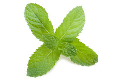 Mint Leafs Stock Photography