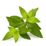 Mint leaves Stock Photos
