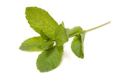 Mint Leaves. A sprig of mint leaves, isolated on a white background Stock Images