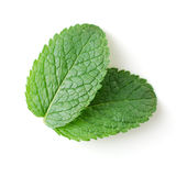 Mint leaves. Two fresh mint leaves isolated over white Royalty Free Stock Image