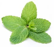Mint leaves. Royalty Free Stock Photos