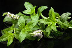 Mint leaves. Green mint leaves, on black background Royalty Free Stock Image