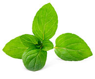 Mint leaves. Isolated on white Stock Photography