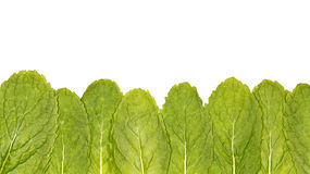 Mint Leaves. Fresh green mint leaves at the bottom. On white Stock Photo
