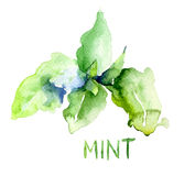 Mint leaves. Watercolor illustration with inscription Royalty Free Stock Photography