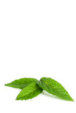 Mint leaves. Three mint leaves on white background Stock Photos