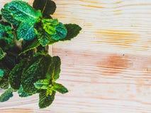 Mint leaves Arkivbilder