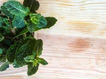 Mint leaves Fotografering för Bildbyråer