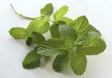 Mint leaves Royaltyfri Bild