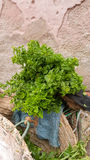 Mint Leaves in Bags on Bicycle Royalty Free Stock Images