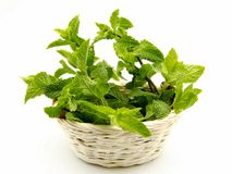Mint leaves in a basket Royalty Free Stock Photography