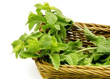 Mint leaves in a basket Stock Images
