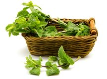 Mint leaves in a basket Stock Image